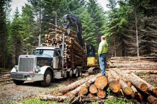 Procesar la madera pero con reforestación inmediata