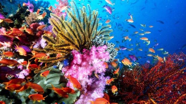 Los arrecifes son vitales para el planeta