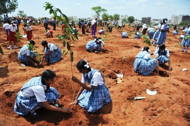 Plantan 50 millones de árboles en un día