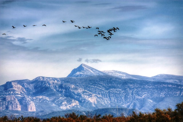 Aves orientadas por la luz polarizada
