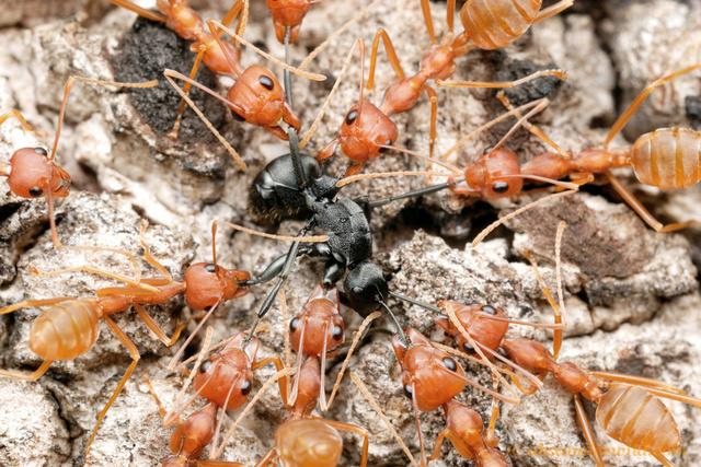 Hormigas son muy útiles al planeta