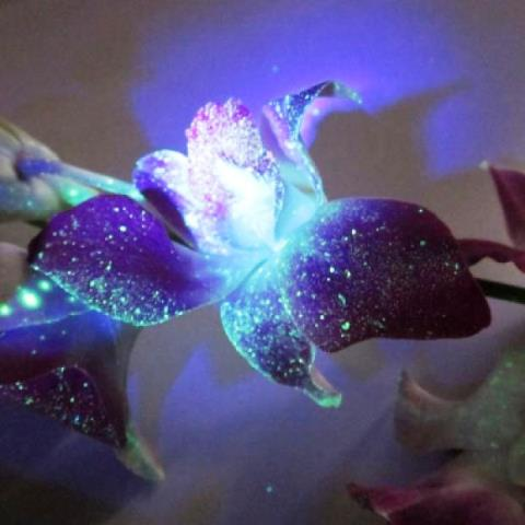 Flores para iluminar