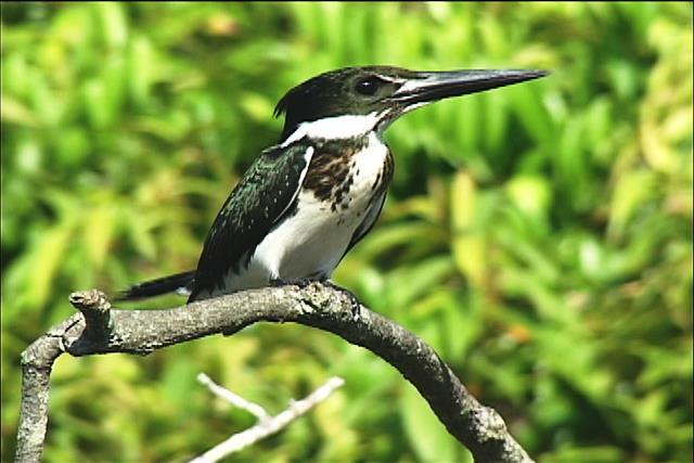 La fauna biodiversa gracias a los humedales