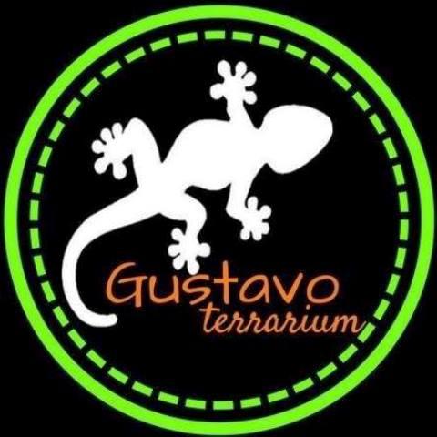 Guatavo Terrarium, un emprendimiento para educar y concientizar sobre animales con muy mala fama.
