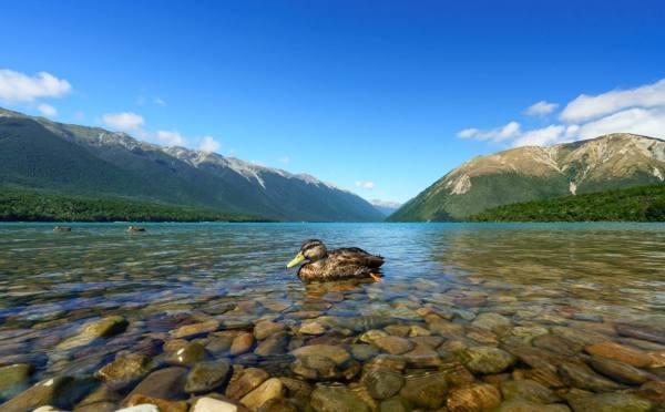 Zealand Nelson Lakes & Wharariki Beach