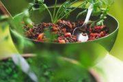 Las mejores recetas veganas con lentejas
