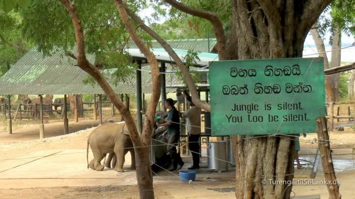 Elephant Transit Home Udawalawe - Vær stille