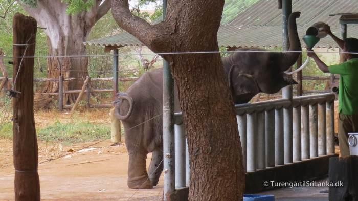 Elephant Transit Home - Udawalawe - Sri Lanka