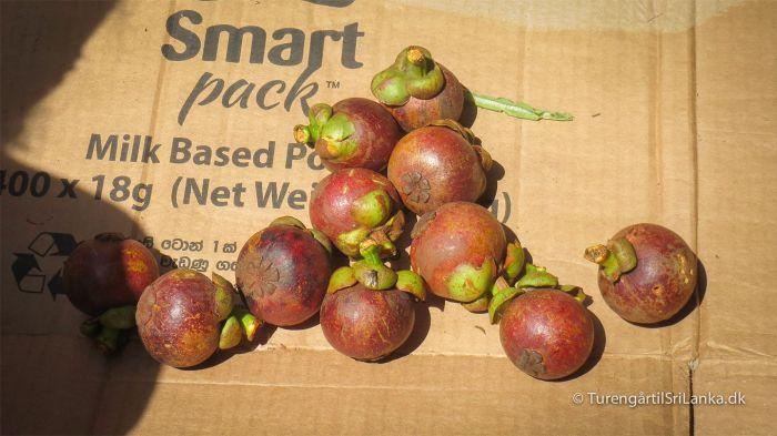 Mangosteen på grøntmarkedet