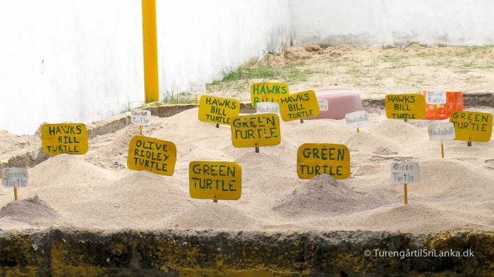 Telwatta Turtle Hatchery