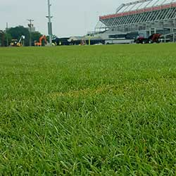 image of freshly installed grass sod on an athletic field