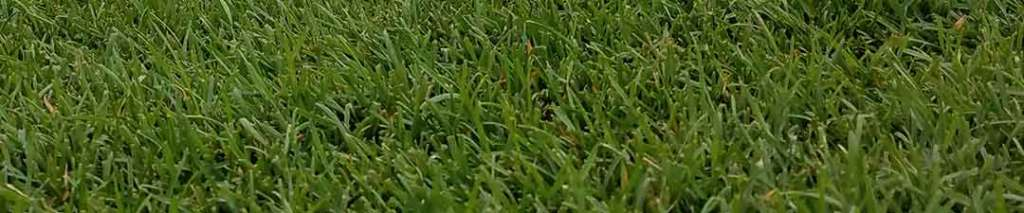 close up image of sod grass for DIY
