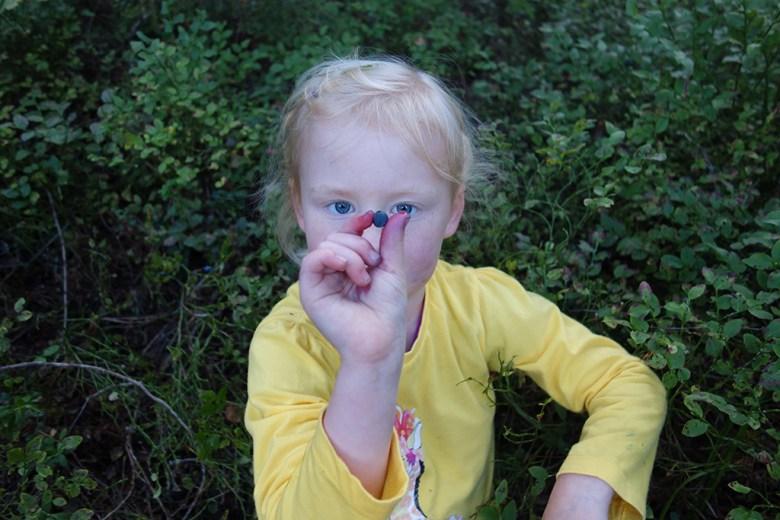 Olivia (snart 5) plukket og spiste mye blåbær