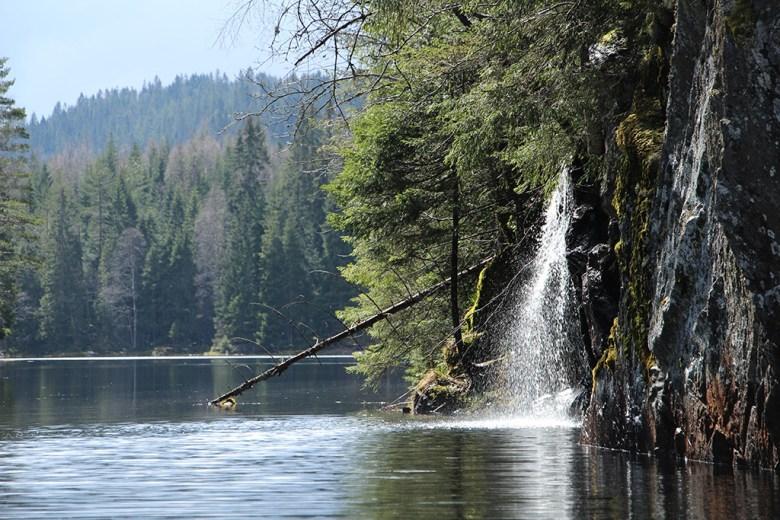 Det har regnet mye de siste døgnene og skogen er våt