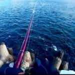 テトラ前打ち短時間釣行でバクバク撓るブラックジャックスナイパーSMT。その日の正解に如何に早くたどり着けるかが肝!翌日は志半ばで時間切れ(´;ω;`)
