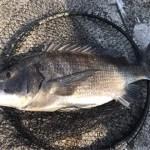 【目印落とし込み】後編 神戸地波止ランガン~午後は神戸渡船 de 沖堤防へ。棚が変化し難しくも楽しい釣りでした。