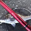 【テトラ前打ち】この時期のおチヌ様は焦るな!焦るな!SMTで食わせる釣りが正解?!いえアタリはコンッて北で!!