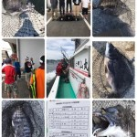 茅渟関西連合前打ち大会参加!釣る人は釣るし大会だからやる釣り方。もちろんワカメやいやいでした。色々と勉強になりますたー