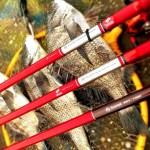 テトラ×カニ 壁×フジツボ。そしてイガイ。この時期は釣り場と状況さえ見極めると、どの餌でも楽しめます