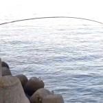 冬の落とし込み釣り2月前半ダイジェスト(*´Д`)