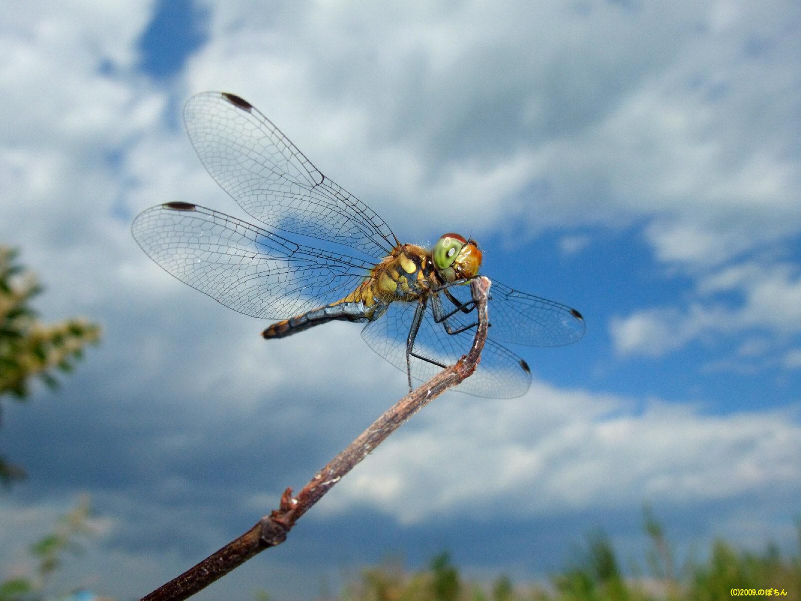 水生昆虫の生態はどうなってるの?