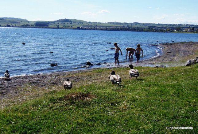 NUEVA ZELANDA. 4 DIAS RUTA ISLA NORTE