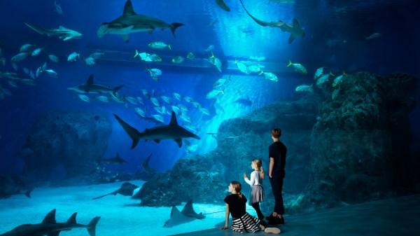 Børn foran oceantank. (Foto: Jens Bangsbo/Den Blå Planet)