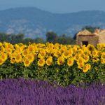 Provence: conheça a região mais charmosa e ensolarada da França