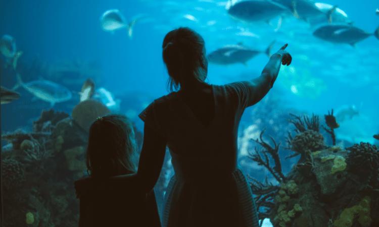 o que ver no sea life london aquarium