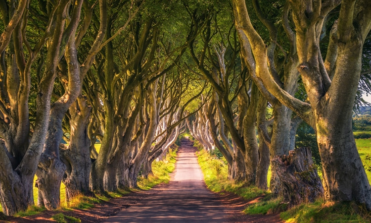 Roteiro Game of Thrones Irlanda Árvores