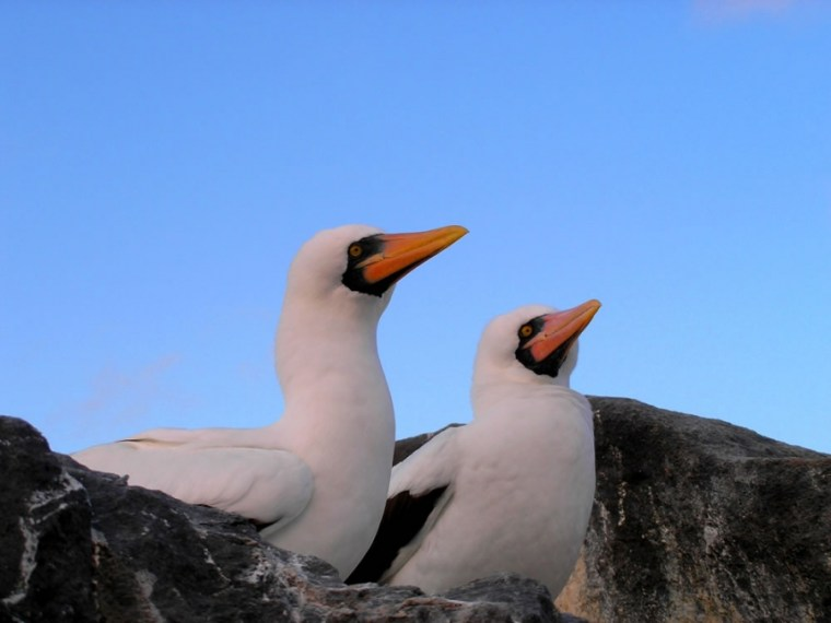 TOUR 10 DAYS/9 NIGHTS GALAPAGOS FULL ADVENTURE