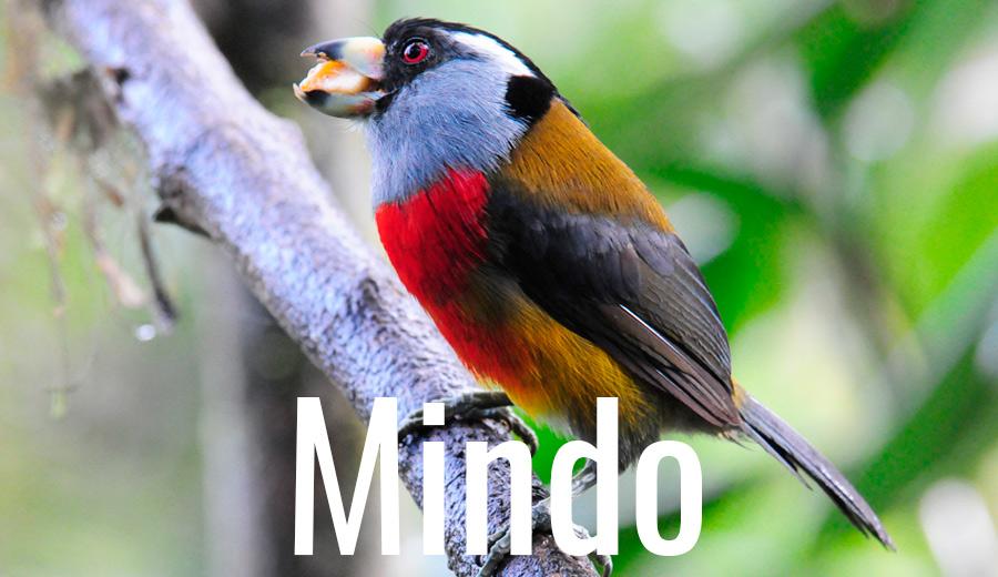 Lodge Mindo
