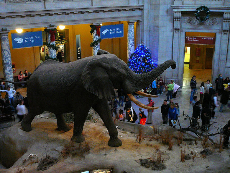 Natal no Museu Natural de História