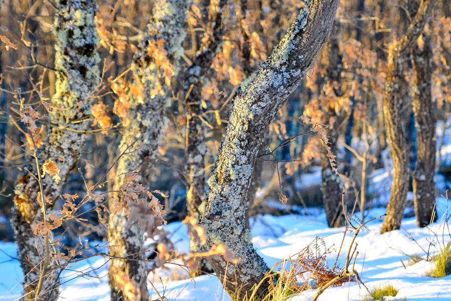 Árboles en invierno en Ponferrada