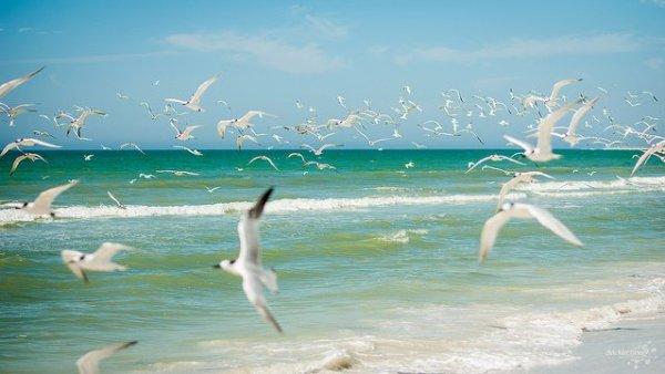 Marco Island. Foto: Dirk Kirchner