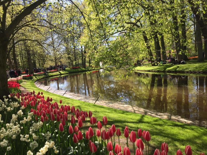 Keukenhof: como visitar o parque mais florido da Holanda?