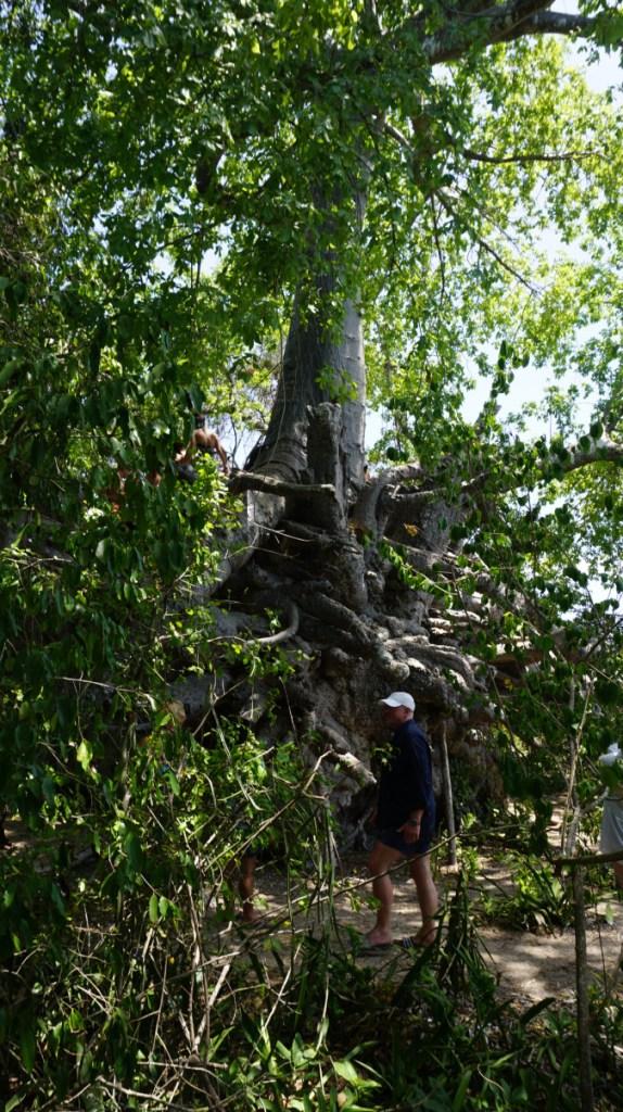 Blue Safari - baobab