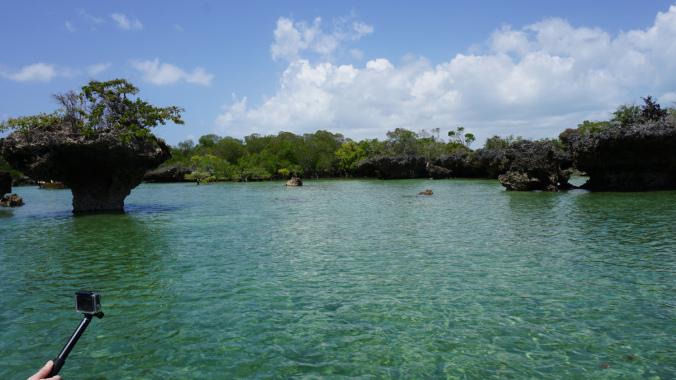 Blue Safari - mangroves forest
