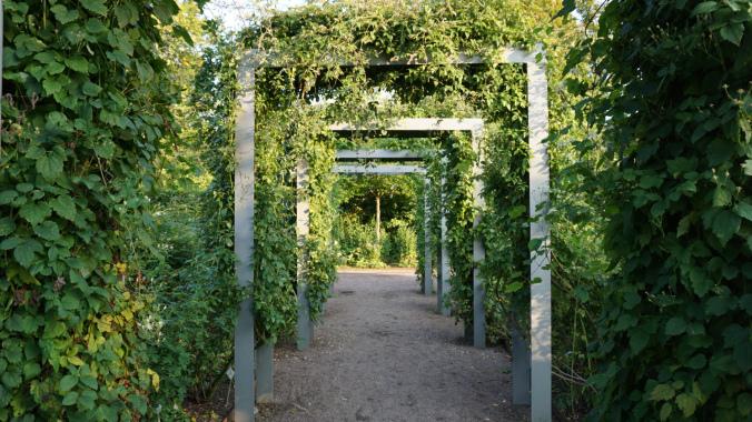 Goteborg - botanical garden4