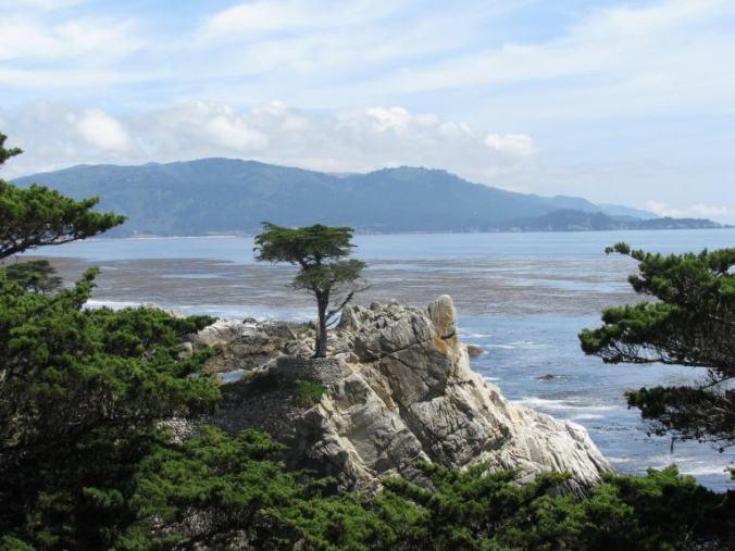 Monterey - 17 mile drive tree
