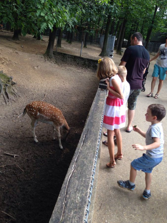 Nyiregyhaza Zoo - deer