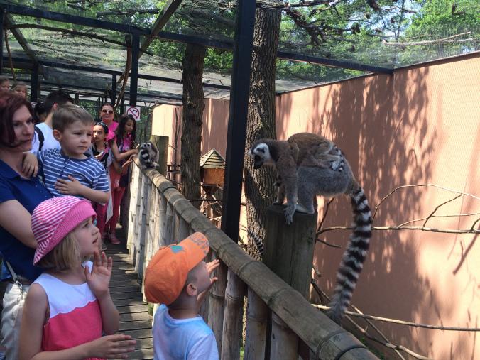 Nyiregyhaza Zoo - monkeys
