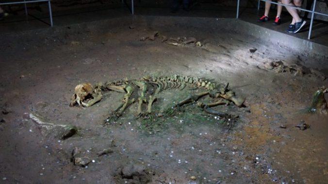 Pestera Ursilor si Scarisoara - last bear bones