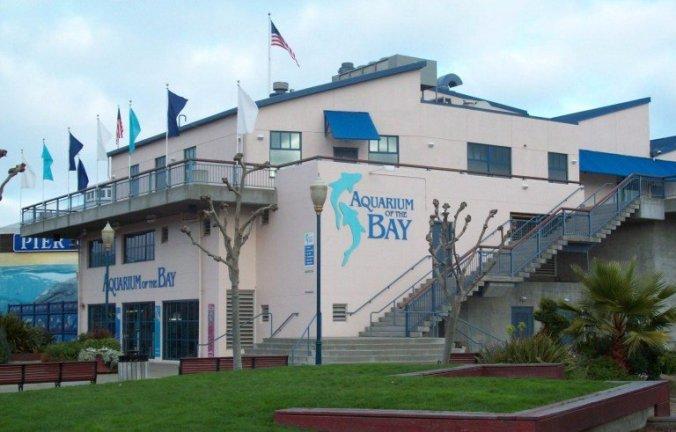 San Francisco - aquarium