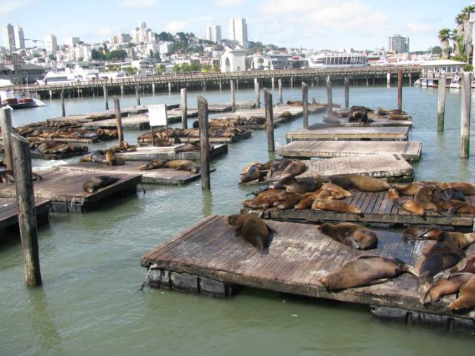 San Francisco - sea lions