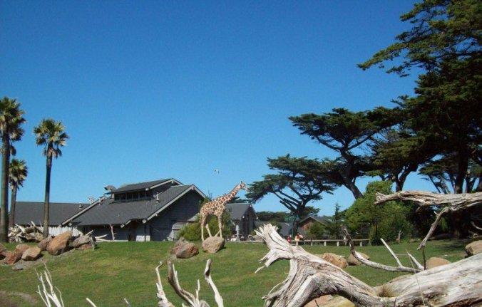 San Francisco - zoo1