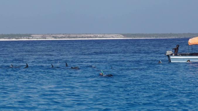 Zanzibar Tanzania - dolphins2
