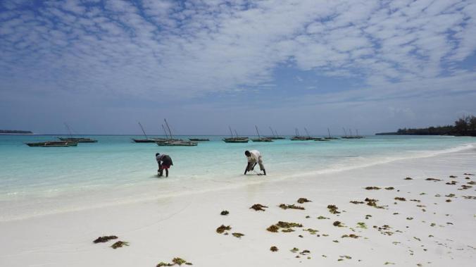 Zanzibar Tanzania - mnemba fishermen