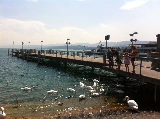 Zurich - swans