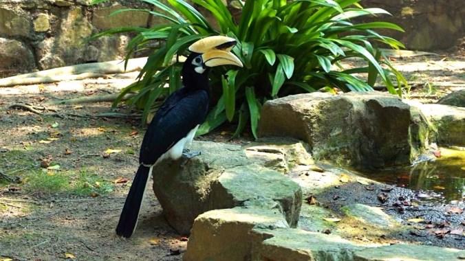 Penang - bird park1
